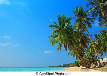 Tropical beach with palm trees, Thailand