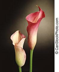 Calla Lily Floral Still Life
