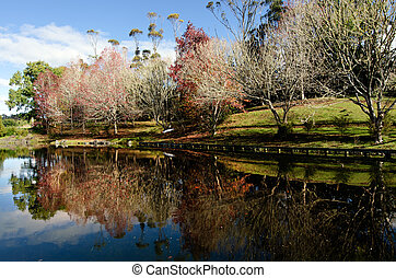 Autumn Season - Reflection of maple trees in a lake during...