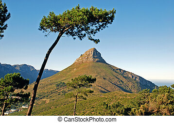 """mountain in Capetown - landscape with mountain """"Lion's Head""""..."""