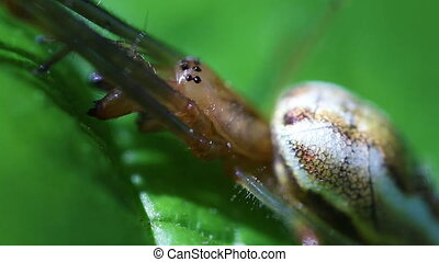Long-jawed spider - super macro - Long-jawed spider -...