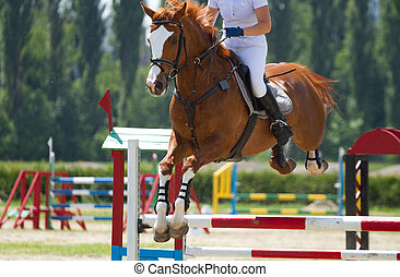 equestrian show jumping - Horse jump a hurdle in competition...