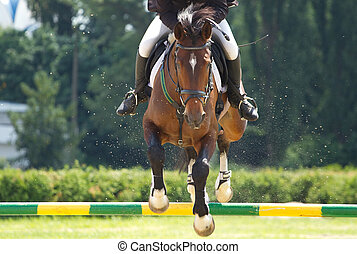 equestrian show jumping - Horse jump a hurdle in competition