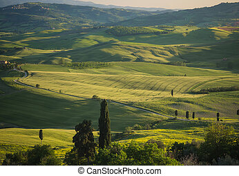 Green field in Tuscan landscape at sunset - Panoramic view...