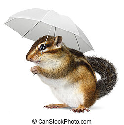 Funny animal with umbrella on white - Funny chipmunk with...