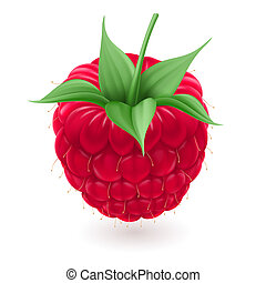 Red raspberries Illustration on white background for design