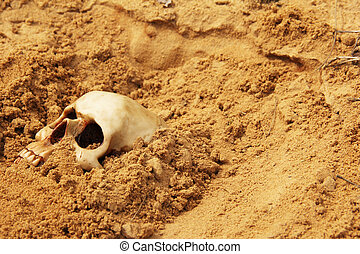 human skull half buried in the sand