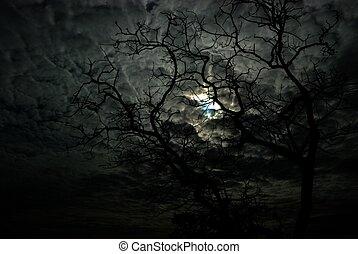 The dark tree scary at night. - The dark tree scary at...