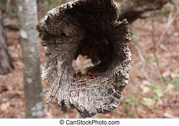 Hollow Log - A hollow tree trunk