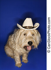 Dog wearing cowboy hat - Fluffy brown dog wearing cowboy hat...