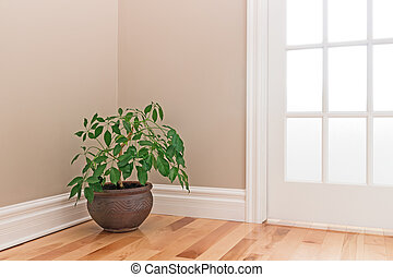 Green plant decorating a room corner - Green plant in a clay...