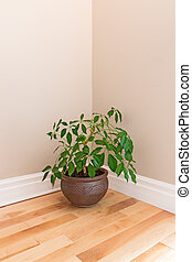 Green plant in a room corner - Green plant in a clay pot...
