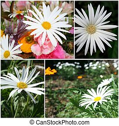 Daisy Artwork - A montage of daisies suitable for printing...