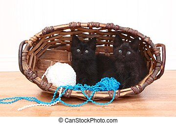 Curious Kittens Inside a Basket on White