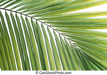 banana leaves background isolated