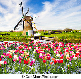 Holland - Windmill with tulips in Holland
