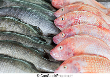 Fresh-caught sea fish on a counter in the fish market