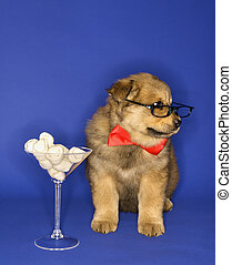 Puppy with bones in martini glass. - Puppy wearing...