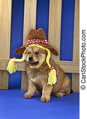 Puppy in cowgirl outfit. - Puppy wearing hat and braids...