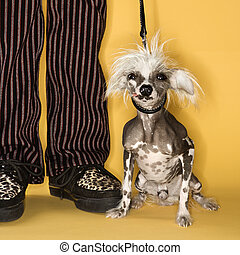 Chinese Crested dog with man. - Chinese Crested dog on leash...