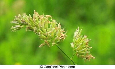 Grass - background is green grass