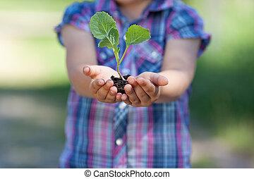 Little plant - Conceptual portrait of little plant holding...