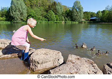 Little girl feeding the ducks at the edge of a lake pointing...