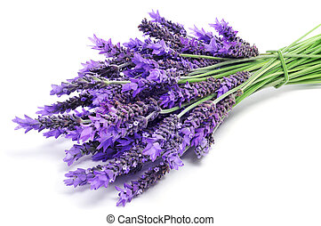 lavender flowers - a pile of lavender flowers on a white...