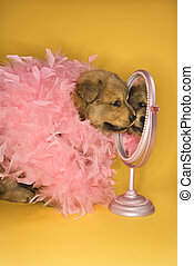 Puppy wearing pink feather boa. - Puppy wearing pink feather...