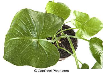 planten,  Macro, binnen