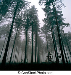 Trees Thetford Forest - Forest at Thetford, UK, Wintertime