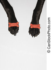 Black dog balancing treats on paws. - Black dog balancing...