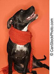 Dog sitting wearing scarf.