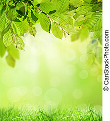 Natural background - Green hornbeam leaves with blur...