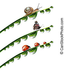 dew drop with snail,butterfly and ladybugs