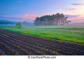 Beautiful morning landscape with field and trees in the fog.