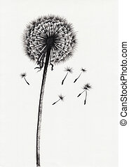 Dandelion watercolor painted image - Watercolor painted...