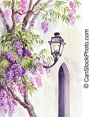 Wisteria and lantern - Lantern among the wisteria blossom...