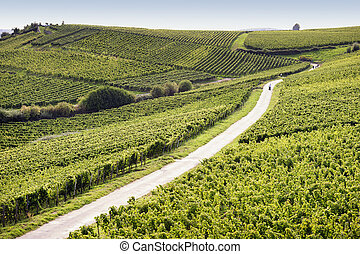 Rheingau Riesling Vineyards near the Niederwalddenkmal ++...