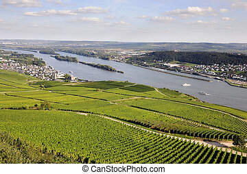 Rheingau Riesling Vineyards and river Rhine near the...