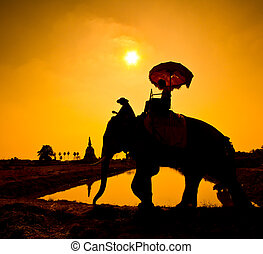 Elephant silhouettes in rural Thailand