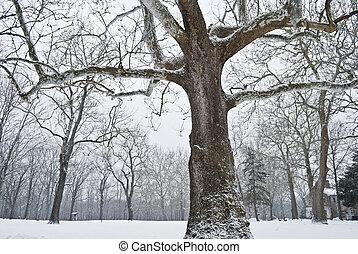 Allaire Winter Landscape - A Winter landscape in Historic...
