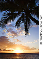 Ocean sunset in Maui. - Sunset sky framed by palm tree over...