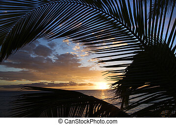 Maui sunset with palms. - Sunset sky framed by palm fronds...