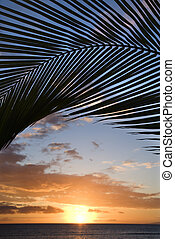 Maui sunset over Pacific. - Sunset sky framed by palm fronds...