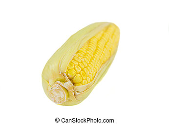 Ear of Corn - A single ear of corn over white background