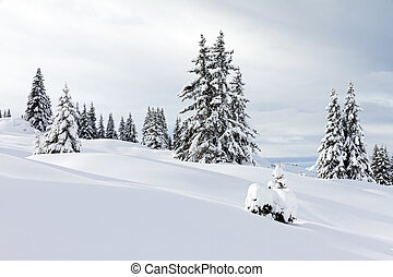 Snow landscape - Beautiful fresh powder landscape with pine...