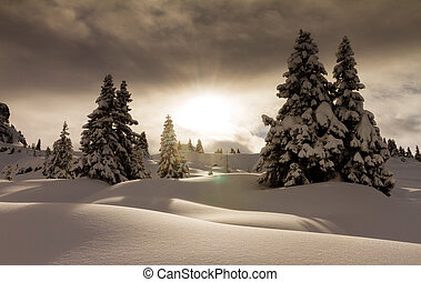 Sunrise powder - Beautiful fresh powder landscape with pine...