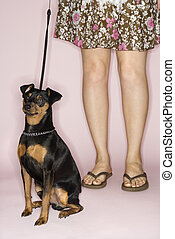 Woman with dog on leash. - Caucasian woman legs with...