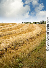 Hay Field - A hay field at a U Pick berry farm in the...